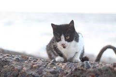 Gato en la playa Alexandría fotografía de archivo libre de regalías