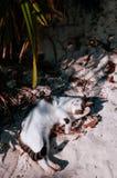 Gato en la playa de la arena de la bahía de Kabira, Ishigaki, Okinawa imagen de archivo libre de regalías