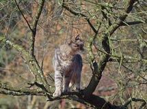 Gato en la rama del árbol Imagen de archivo libre de regalías