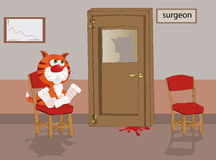 Gato en la recepción en el doctor Foto de archivo