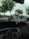 Gato en la rociada de un coche Foto de archivo