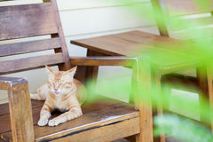Gato en la silla del brazo Imagen de archivo libre de regalías