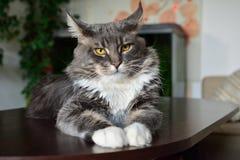 Gato en la tabla Foto de archivo