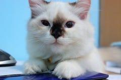 Gato en la tabla Imagenes de archivo