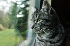 Gato en la ventana Imagen de archivo libre de regalías