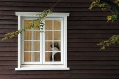 Gato en la ventana Fotografía de archivo libre de regalías