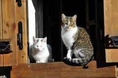 Gato en la ventana Foto de archivo