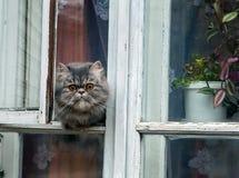 Gato en la ventana Fotografía de archivo
