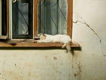 Gato en la ventana de una casa vieja Foto de archivo