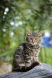 Gato en la yarda Foto de archivo libre de regalías