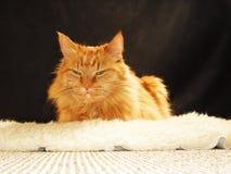 Gato en la zalea Imagen de archivo