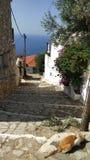 Gato en las calles de la piedra del adoquín, islas de Grecia imágenes de archivo libres de regalías