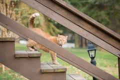 Gato en las escaleras Fotos de archivo