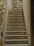 Gato en las escaleras Fotos de archivo libres de regalías