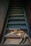 Gato en las escaleras de madera Fotos de archivo
