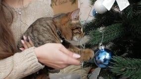 Gato en las manos de una muchacha que juega cerca del árbol de navidad almacen de video