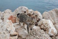 Gato en las rocas por el mar Foto de archivo
