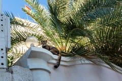 Gato en los aleros de un edificio residencial debajo de una palmera imagen de archivo