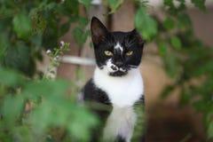 Gato en los arbustos Fotografía de archivo libre de regalías
