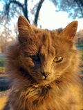 Gato en los rayos de la puesta del sol Fotografía de archivo