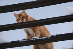 Gato en los vigas de la cubierta del patio Imagenes de archivo