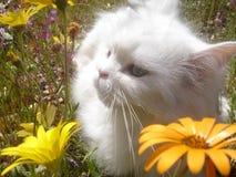 Gato en los Wildflowers 2 Imagen de archivo