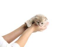 Gato en manos Imágenes de archivo libres de regalías