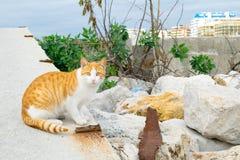 Gato en mi puerto local Foto de archivo libre de regalías