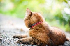 Gato en naturaleza Imagenes de archivo