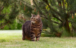 Gato en naturaleza Foto de archivo libre de regalías