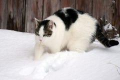 Gato en nieve Fotos de archivo libres de regalías