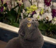 Gato en orquídeas Fotografía de archivo libre de regalías