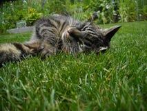 Gato en paraíso verde Fotografía de archivo