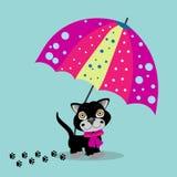 Gato en paraguas Imagen de archivo libre de regalías