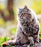Gato en parque Imagenes de archivo