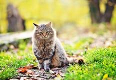Gato en parque Fotografía de archivo
