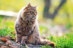 Gato en parque Fotografía de archivo libre de regalías