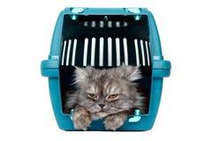 Gato en portador de la jaula Imágenes de archivo libres de regalías