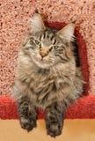 Gato en propiedad horizontal del `s del gato Imagenes de archivo