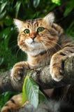 Gato en rama de árbol Foto de archivo libre de regalías