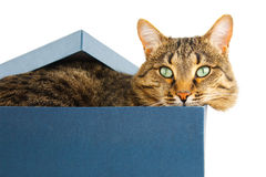 Gato en rectángulo Foto de archivo