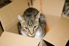 Gato en rectángulo del cartón Fotografía de archivo