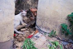 Gato en reliquias Imagen de archivo libre de regalías