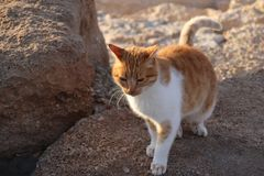 Gato en rocas Imagenes de archivo