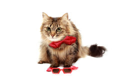 Gato en rojo la corbata de lazo imágenes de archivo libres de regalías