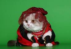 Gato en ropa hermosa. Fotografía de archivo