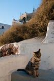 Gato en Santorini Imagen de archivo libre de regalías