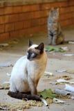 Gato en sol de la última hora de la tarde Foto de archivo