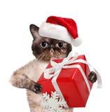 Gato en sombreros rojos de la Navidad con el regalo foto de archivo libre de regalías