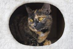 Gato en su casa Fotografía de archivo